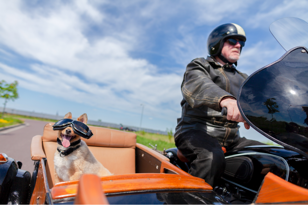 Man on motorcycle with dog in sidecar Shutterstock Image 1084641965 purchased by AKF Partners June 5 2019